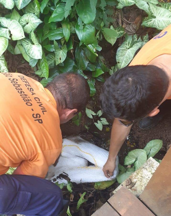 Cetesb avalia danos ambientais de vazamento de diesel na Praia de Maresias em São Sebastião