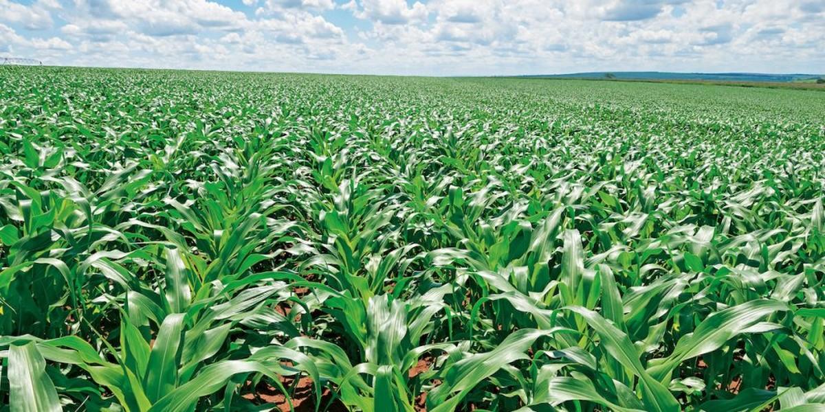 Gigante chinesa de sementes investe R$ 40 milhões em unidade de Paracatu - G1