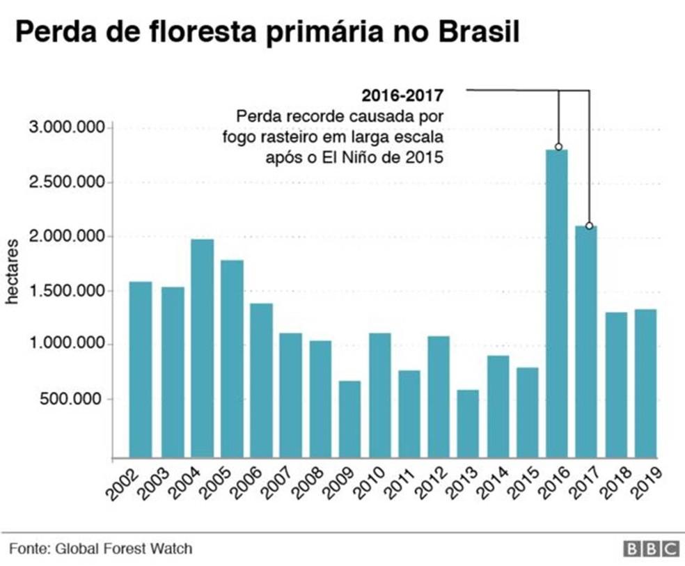 Infografia mostra a perda de floresta primária no Brasil — Foto: Infografia: BBC