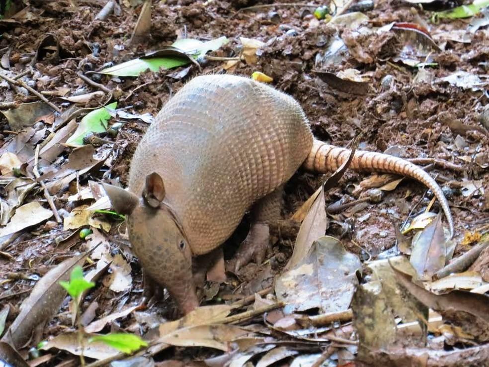 Caçadores de tatu se expõem ao fungo que causa a febre do vale quando entram na toca do animal para capturá-lo (Foto: Foto: Sauena Novaes/ Você no TG)