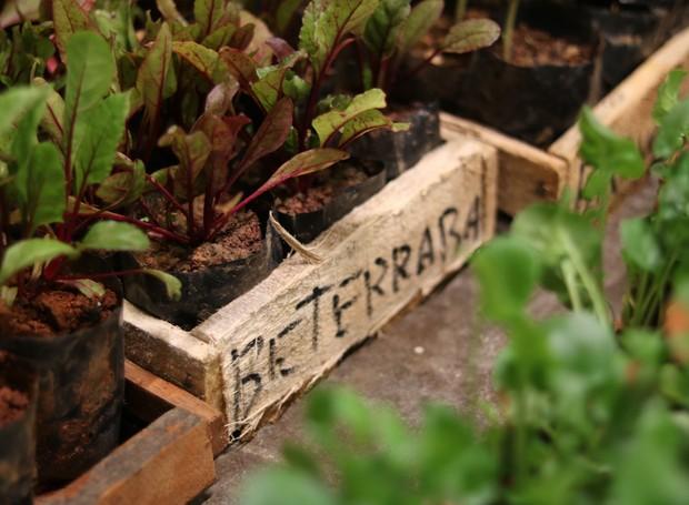 Nas oficinas, os participantes aprendem que as folhas da beterraba também rendem saladas belas e nutritivas (Foto: Brenda Amaral/Divulgação )