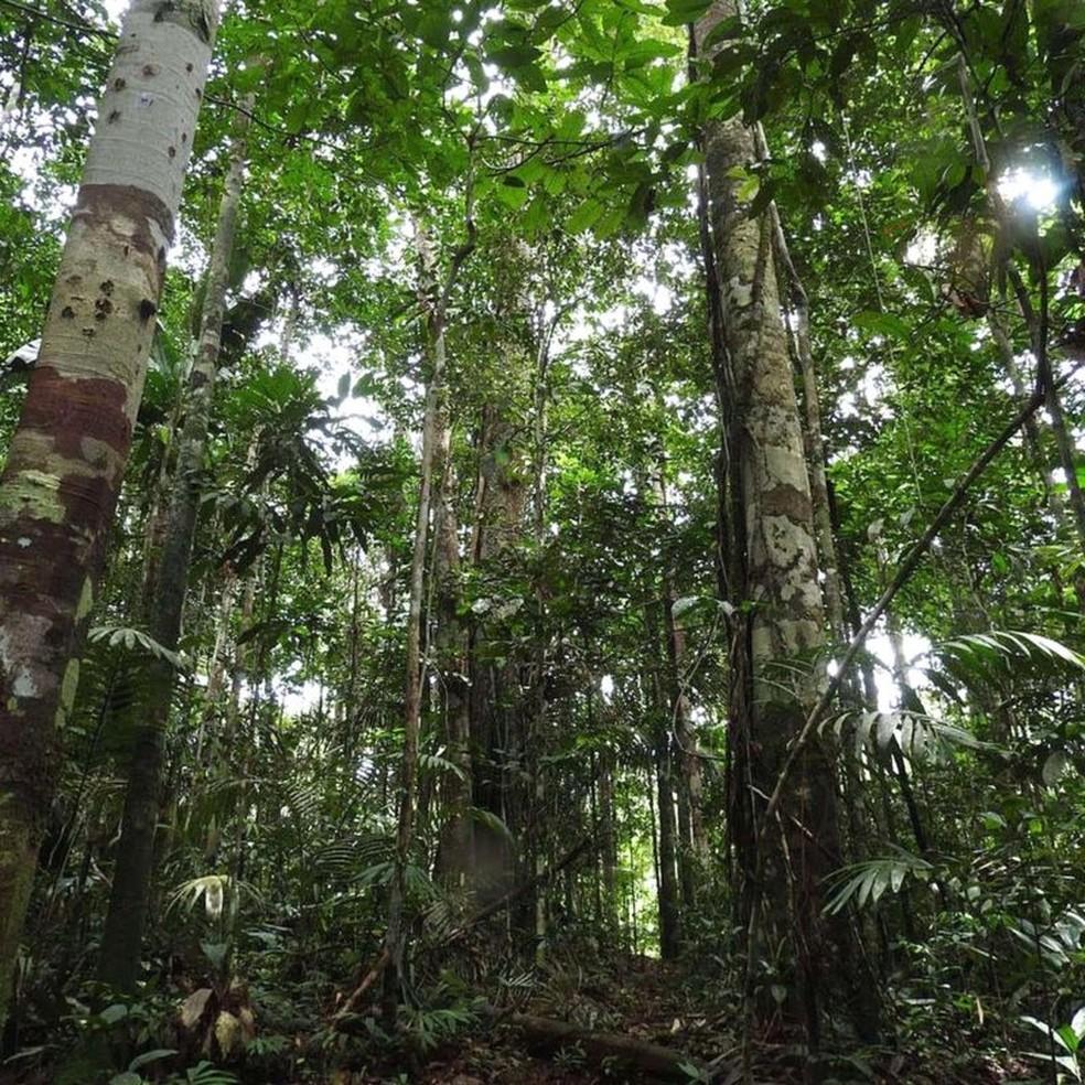 Pesquisadores coletaram amostras de solo da floresta tropical — Foto: Corine Vriesendorp