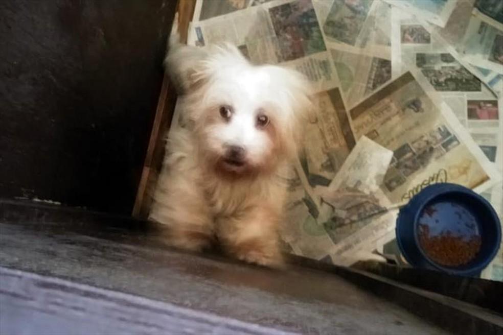 Polícia resgata 36 cães das raças yorkshire e lhasa apso de canil irregular no bairro Xaxim — Foto: Divulgação/Prefeitura de Curitiba