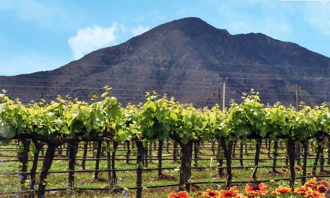 Nuevo Mundo: vinícola produz rótulos orgânicos no Chile