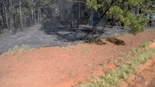Fogo ao lado de Floresta Estadual de Pederneiras mobiliza bombeiros