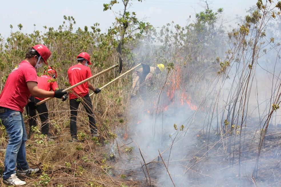 Em junho deste ano foram contabilizados 57 focos de incêndio, enquanto o mesmo período em 2018 teve 123 focos. — Foto: Divulgação/Ipaam