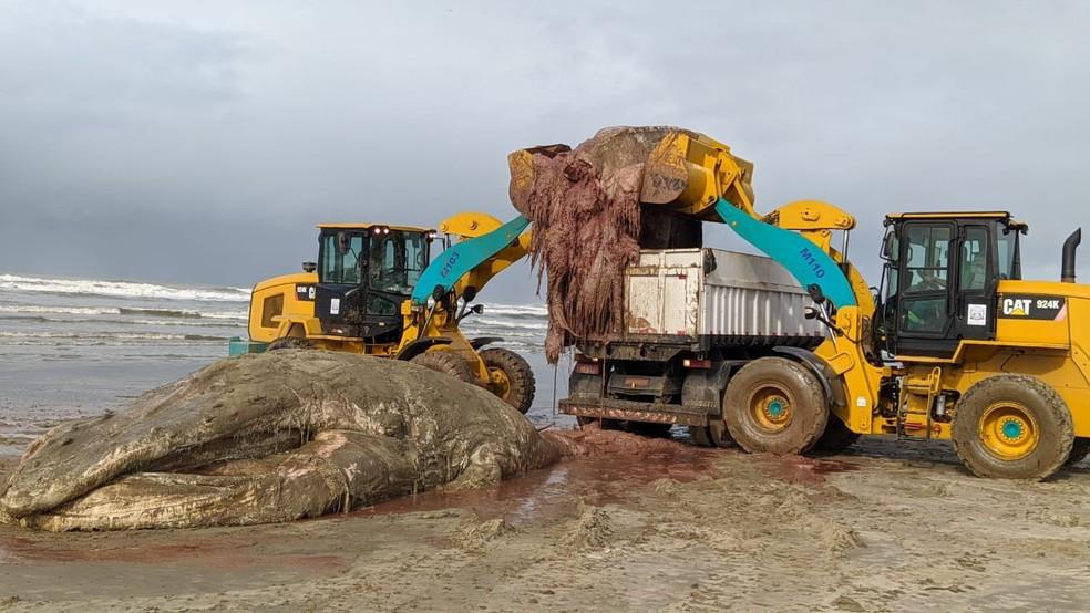 Retroescavadeiras retiram carcaça de baleia da areia, em Praia Grande — Foto: Divulgação/Praia Grande Mil Grau