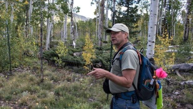Paul Rogers se dedica a monitorar a vida do Pando (Foto: LANCE ODITT via BBC)