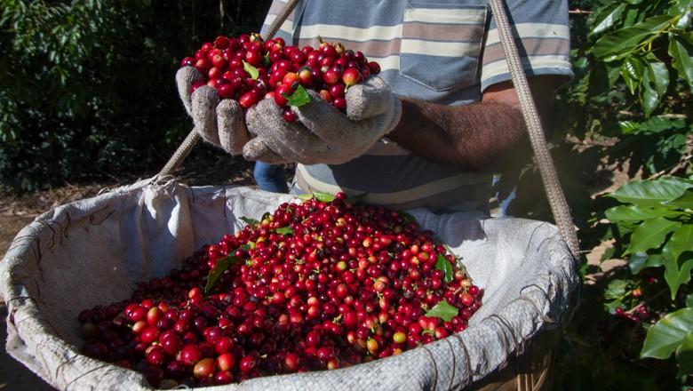 cafe (Foto: Globo Rural)