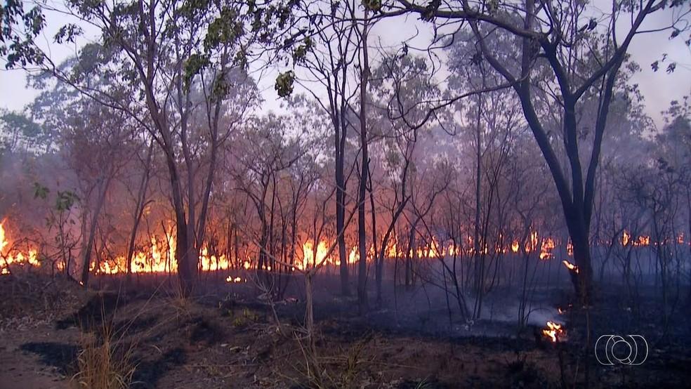 Grandes áreas foram devastadas pelas queimadas no Tocantins (Foto: Reprodução/TV Anhanguera)