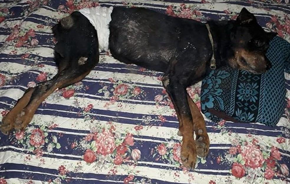 Dogão precisa de produtos e medicamentos para continuar tratamento — Foto: Reprodução/Instagram