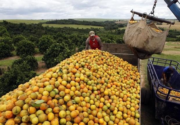 Trabalhadores carregam caminhões com laranja em Limeira, no Estado de São Paulo, Brasil (Foto: Paulo Whitaker/Reuters)