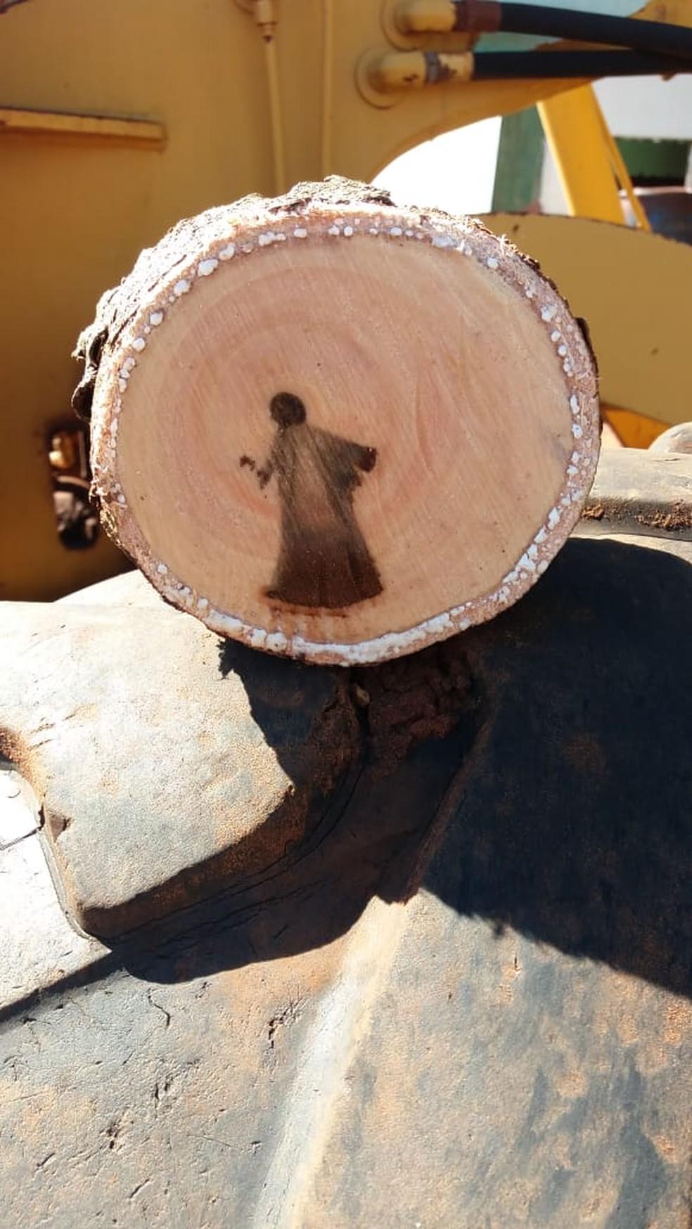 Tronco após ser cortado em duas partes. — Foto: Odimar Souza