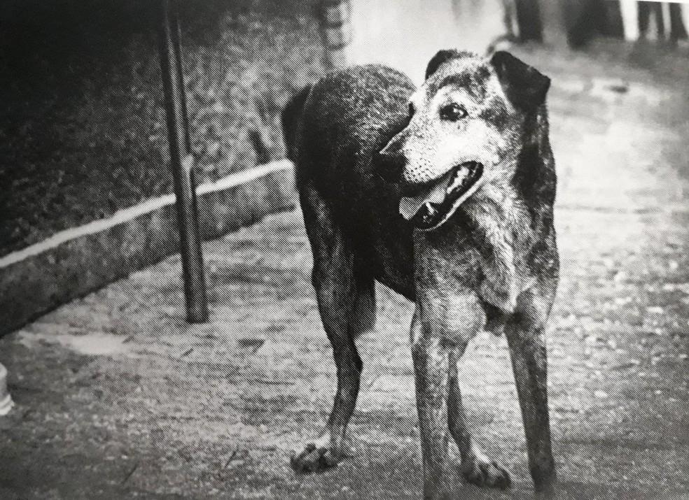 História do cão 'Tupi' inspirou um dos contos do livro de Ana Laura Galone — Foto: Jedson Comitre