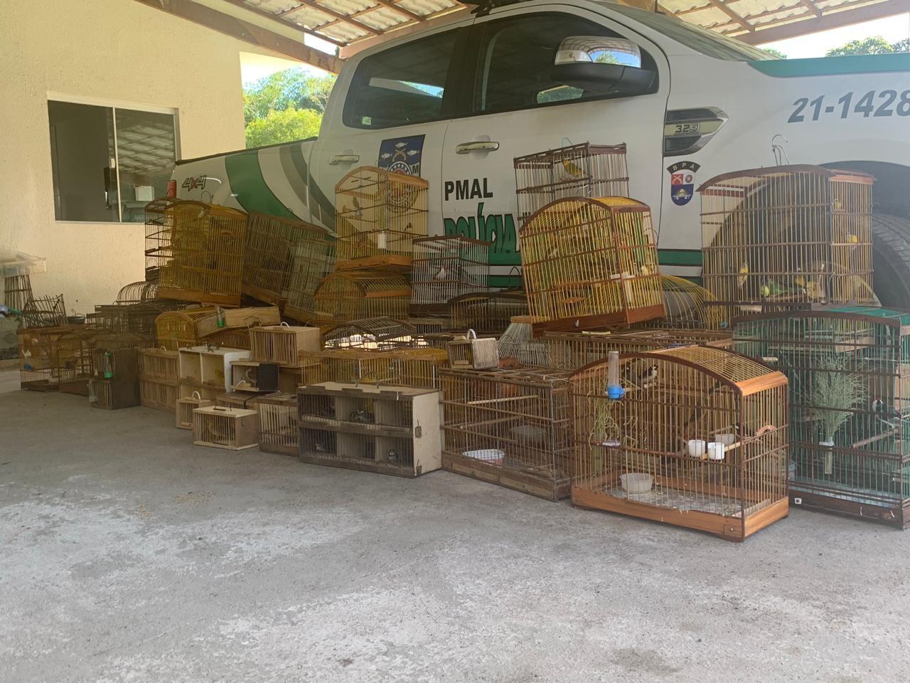 Batalhão Ambiental resgata 208  pássaros silvestres em Maceió e no interior de AL - Noticias