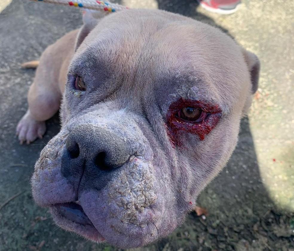 Cão com ferimentos no olho é resgatado — Foto: Reprodução/Gabinete do vereador Luiz Carlos Ramos Filho