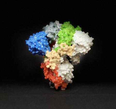 Brasileiros estudam edição genética para barrar infecção por Sars-CoV-2