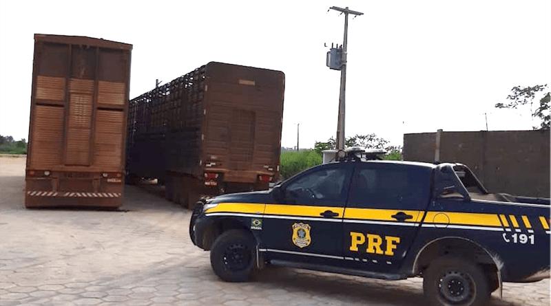 PRF apreende 160 cabeças de bois transportados de forma irregular em Altamira - Notícias - Plantão Diário