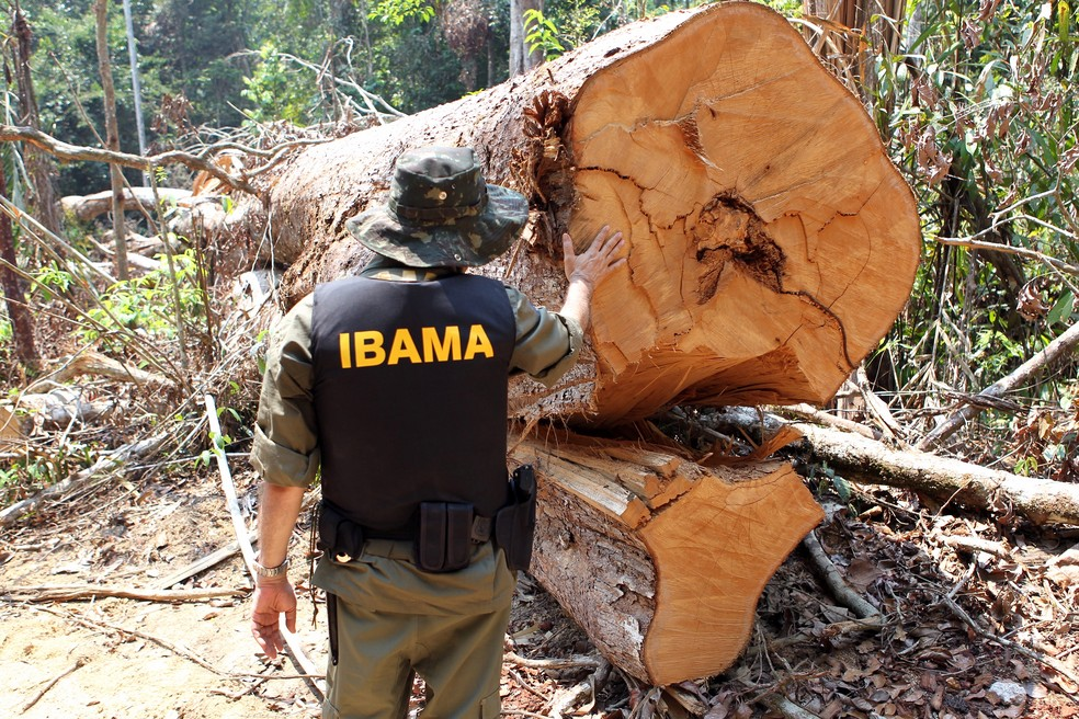 Ibama faz operação de combate ao desmatamento ilegal na região de Castelo dos Sonhos, em Altamira (PA), em agosto de 2016. — Foto: Felipe Werneck / Ibama