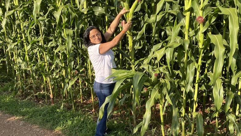 Iracilde Fabel iniciou o plantio de milho há dois anos visando a autossuficiência em grãos (Foto: Arquivo Pessoal)
