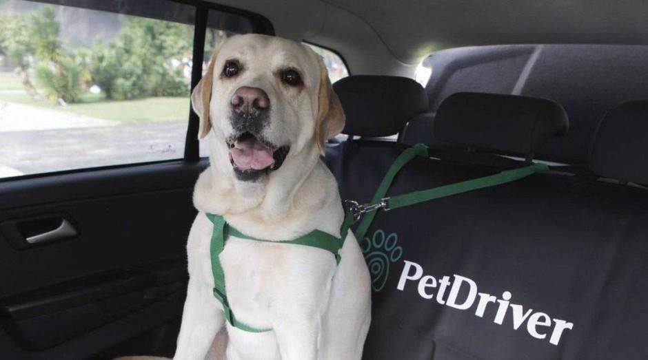 Cachorro sendo transportado pela PetDriver, aplicativo especializado em animais domésticos (Foto: Divulgação)