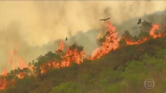 Fogo que destruiu 1,2 mil hectares na Serra da Bocaina é controlado
