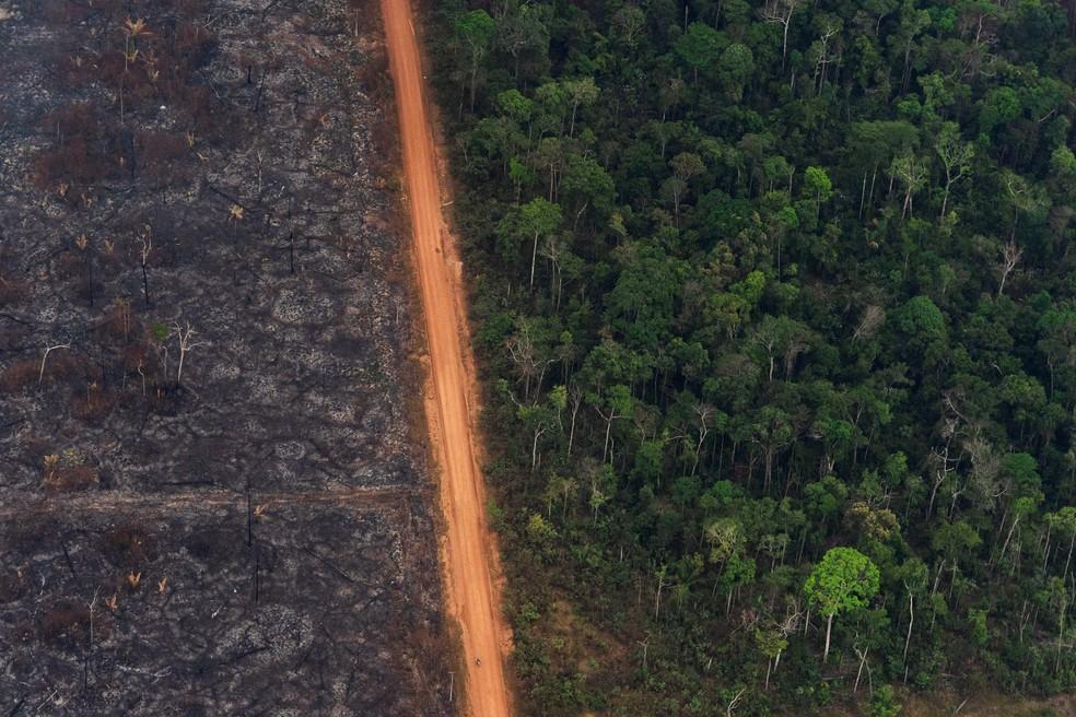 27 de agosto - Estrada separa área de floresta de árvores chamuscadas por queimada em Vila Nova Samuel (RO). A alta no número de queimadas na Amazônia este ano foi tema recorrente e chamou atenção internacional — Foto: Victor R. Caivano/AP