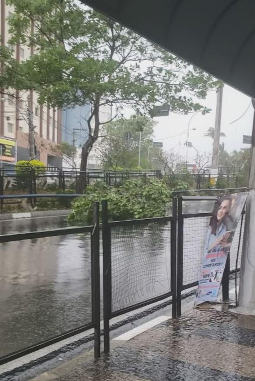 Árvore caiu na região central de Campinas — Foto: Debora Cangussu Oliveira / Arquivo Pessoal