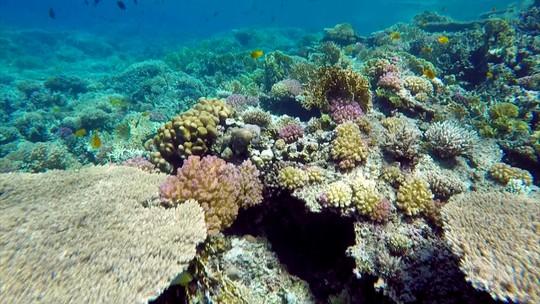 Floresta tropical submarina pode ser vista nas águas transparentes do Mar Vermelho