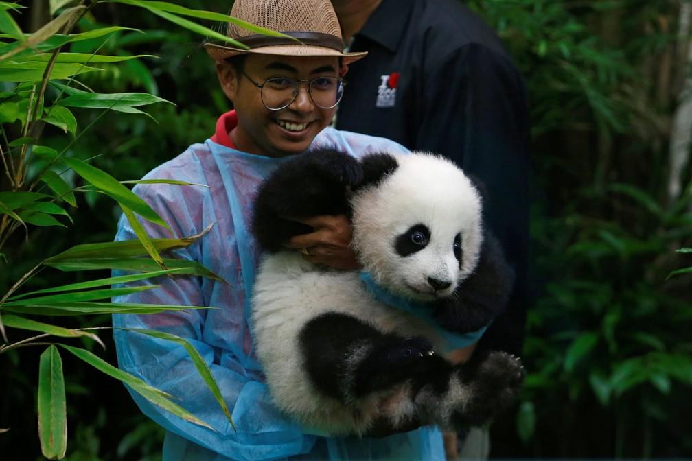 Segundo filhote de panda gigante é apresentado no zoo de Kuala Lumpur (Foto: REUTERS/Lai Seng Sin)