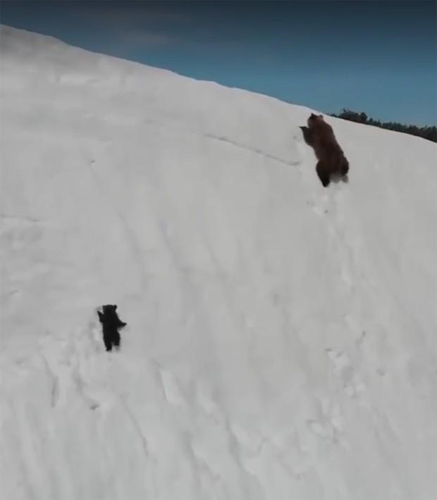 Vídeo de filhote de urso tentando alcançar a mãe viraliza na web (Foto: Reprodução / Facebook)