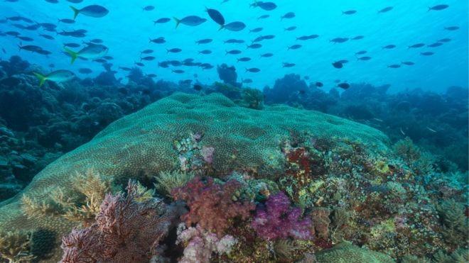 Palau proibiu o uso de protetores solares, produtos que impactam negativamente a vida marinha e também os recifes de coral (Foto: Getty Images via BBC)