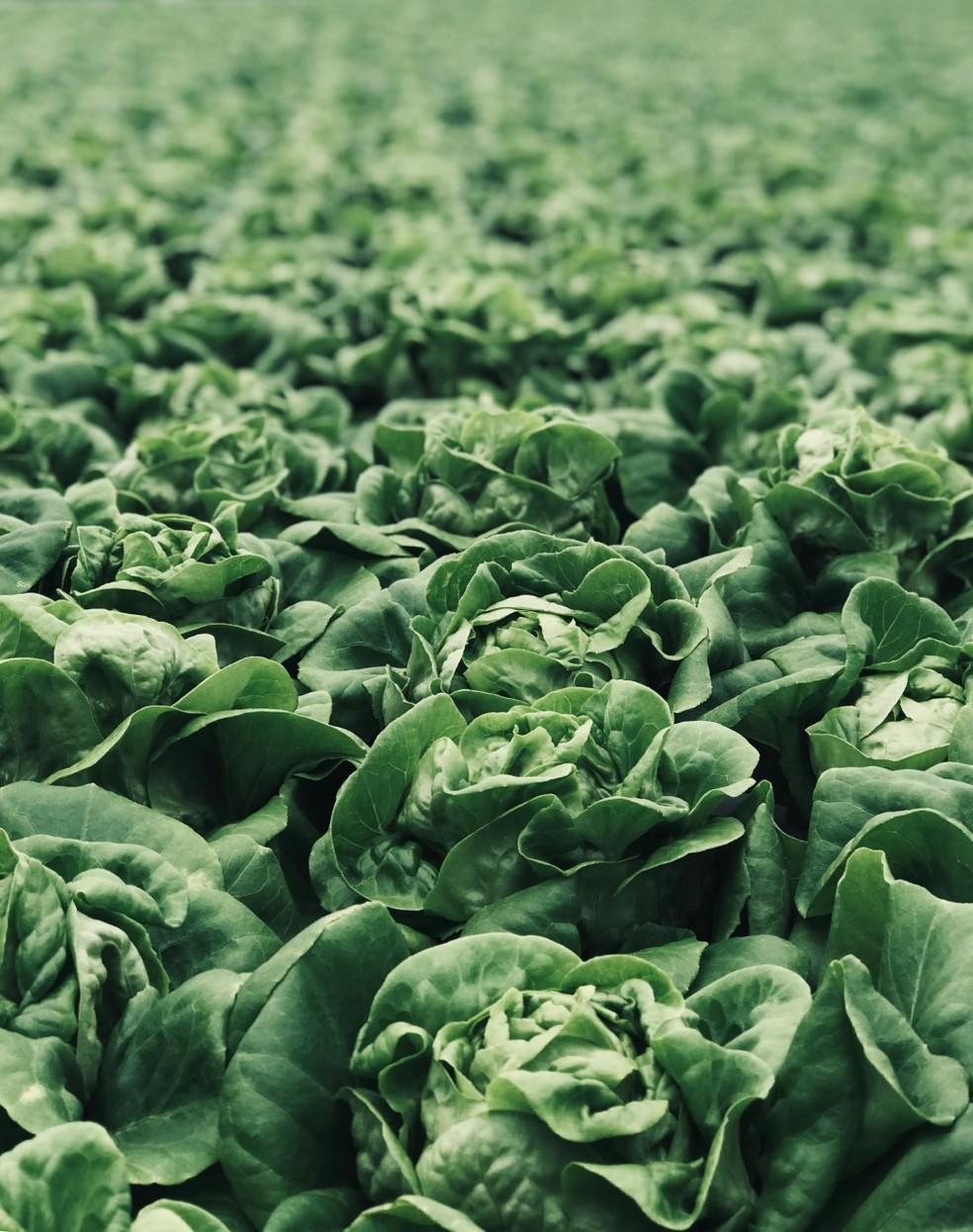 Vegetais verde escuro são ricos em ácido fólico — Foto: Unsplash/Divulgação