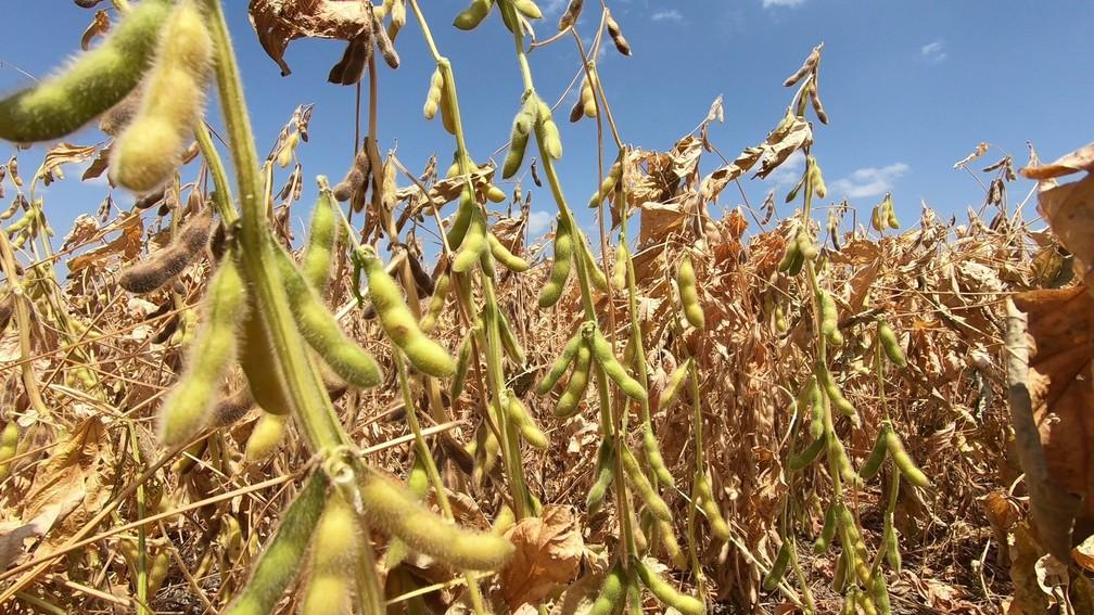 Agroconsult prevê exportações de 67 milhões de toneladas de soja pelo Brasil neste ano — Foto: Rede Amazônica Roriama/ Reprodução