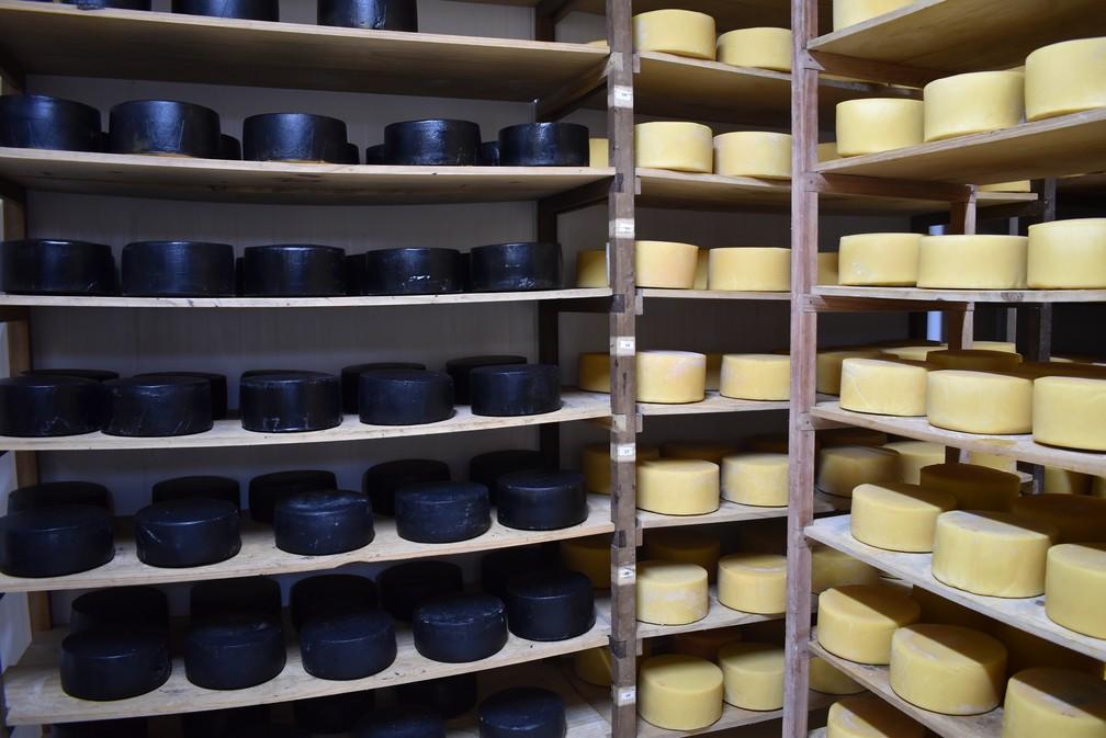 Sala de maturação é como um berçário para os queijos, diz produtor — Foto: Fernanda Rodrigues