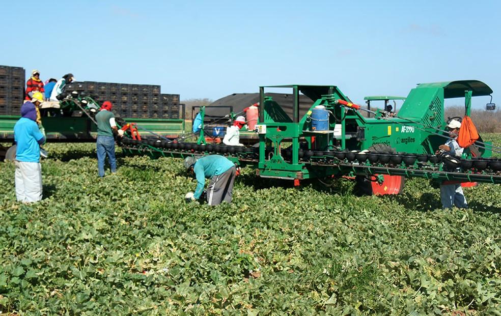 Melão produzido na Agrícola Famosa é um dos produtos potiguares líderes de exportação — Foto: Anderson Barbosa/G1