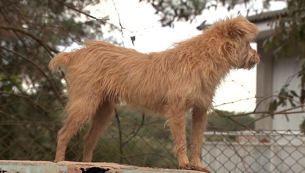 Casal adotou 138 cachorros que foram abandonados no Ganchinho, em Curitiba — Foto: Reprodução/RPC