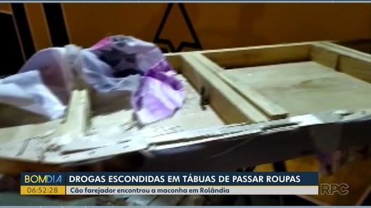 Cão farejador encontra droga escondida em tábuas de passar roupa dentro de ônibus, em Rolândia