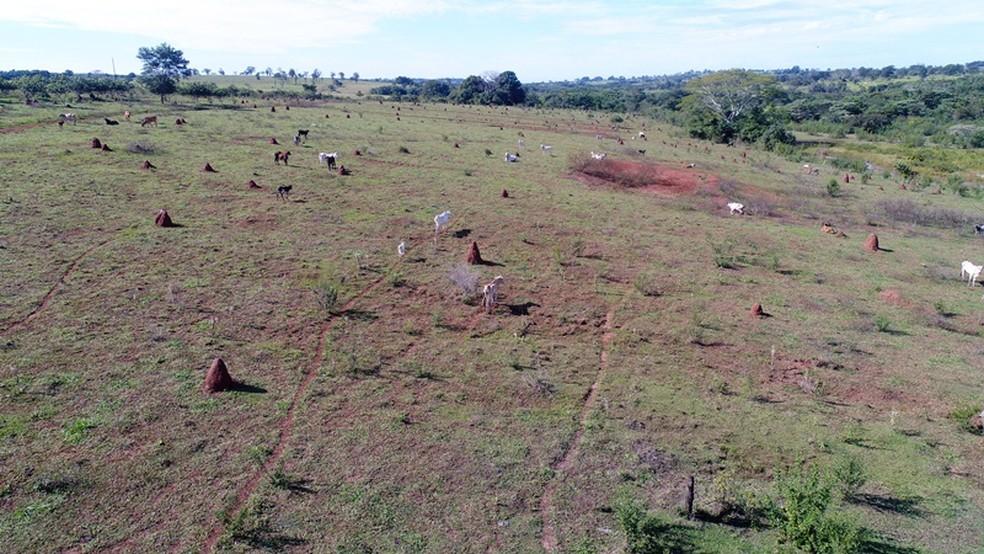 Área sem pastagem onde o gado foi encontrado — Foto: PMA/Divulgação