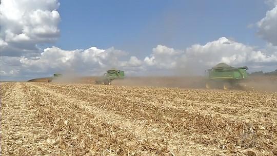 Custo para produzir milho aumenta e agricultores armazenam sacas para evitar prejuízos nas vendas em MT