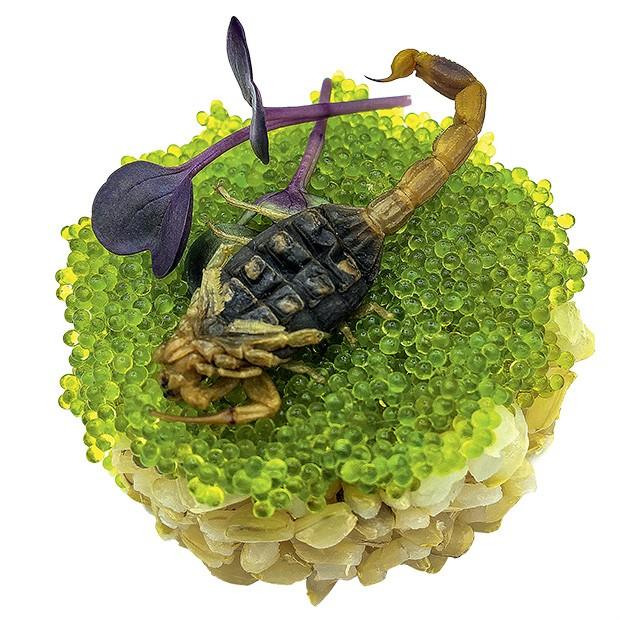 Gastronomia: Escorpião com ovas de peixe voador e arroz.  (Foto: divulgação)