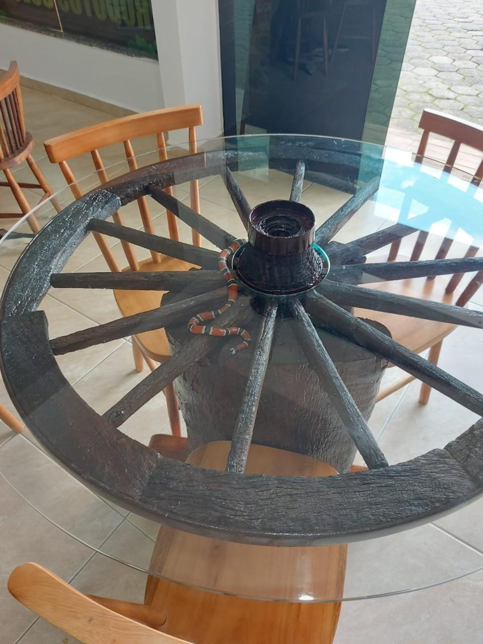 Cobra-coral é encontrada dentro de mesa em loja no Vale do Itajaí