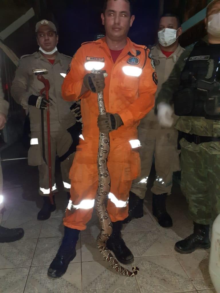 Cobra de 1,5 metro escondida dentro de casa é resgatada pelos Bombeiros, em Macapá