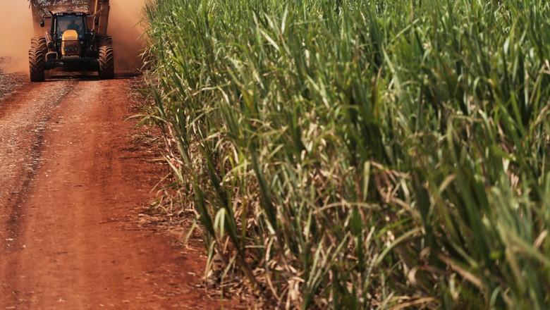 Colheita de cana-de-açúcar (Foto: REUTERS/Nacho Doce)