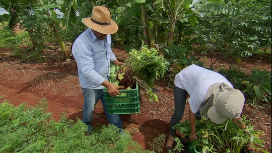 CSA: modelo de produção aproxima agricultores e consumidores; entenda como funciona