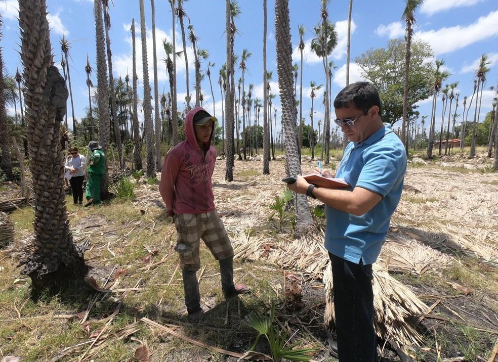 Trabalhadores são encontrados em situação de traballho escravo em São Bernardo — Foto: Divulgação/MPT
