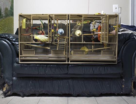 Pássaros não gostam quando são deixados sozinhos por muito tempo. Se não recebem atenção suficiente, podem se comportar mal, mordendo móveis, ou até se machucar, arrancando as próprias penas. Ao lado, pássaros numa gaiola dupla na casa de Brian Wilson (Foto: Miisha Nash)