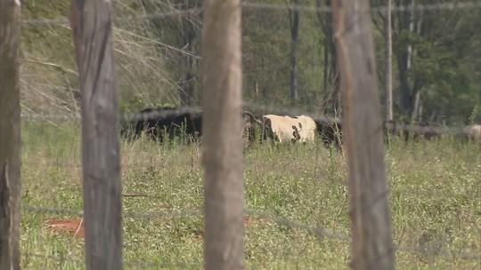 Ocorrências de furto de gado preocupam produtores rurais no Sul de Minas