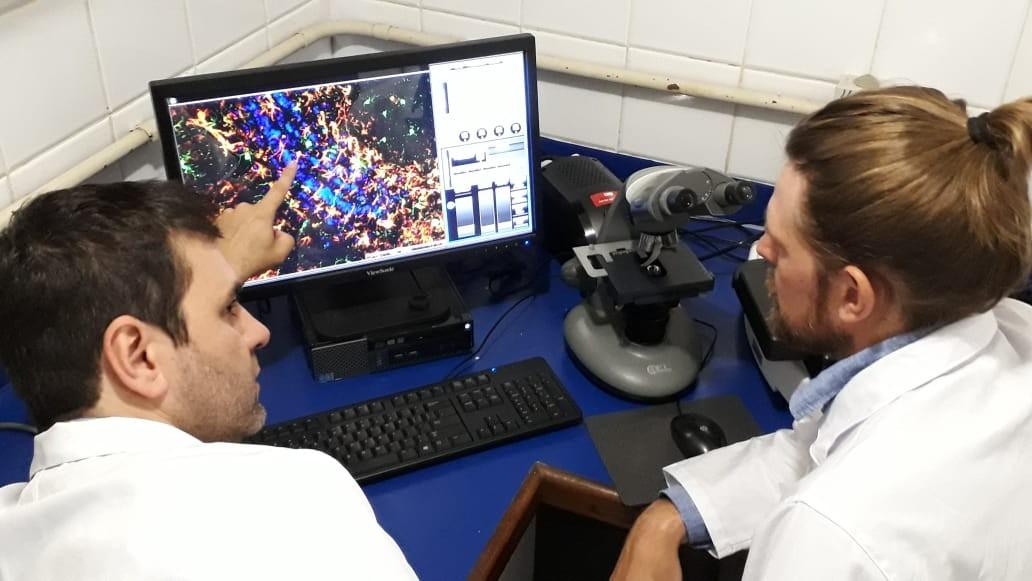 Pesquisadores da UFRGS tentam tornar diagnóstico de Alzheimer e Parkinson mais preciso após descoberta de proteína - Notícias - Plantão Diário
