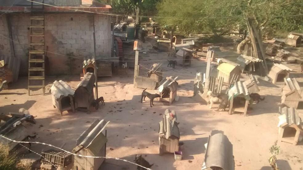 Cães estão espalhados por todo o terreno; segundo Prefeitura, é como se moradora tivesse estendido o próprio quintal  (Foto: Sidneia da Silva Vieira/Arquivo Pessoal)